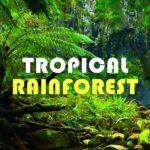 HiLIQ トロピカルフォレスト【これ何味?熱帯雨林味だよ】